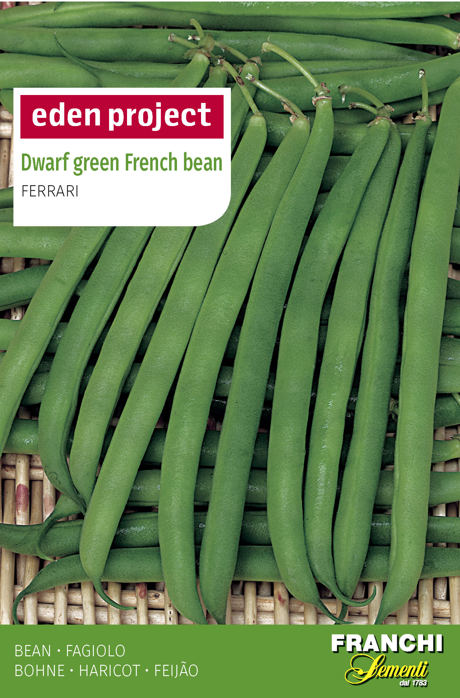 Green French Bean 'Ferrari' - Phaseolus vulgaris