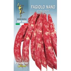 Borlotto Bean Box Stregonta Dwarf UK only (A) Phaseolus vulgaris L.