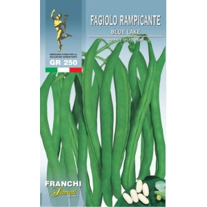 French Bean Blue Lake (A) Phaseolus vulgaris L.