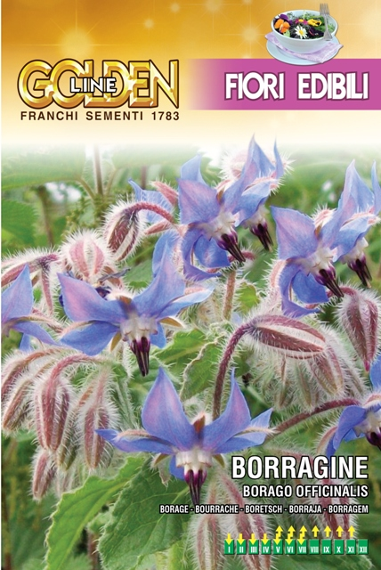 Borage Edible Flowers For The Kitchen
