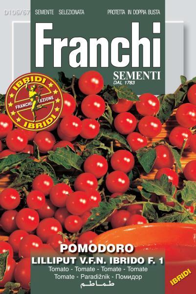 Cherry Tomato Lilliput F1 (A) Solanum Lycopersicum L.