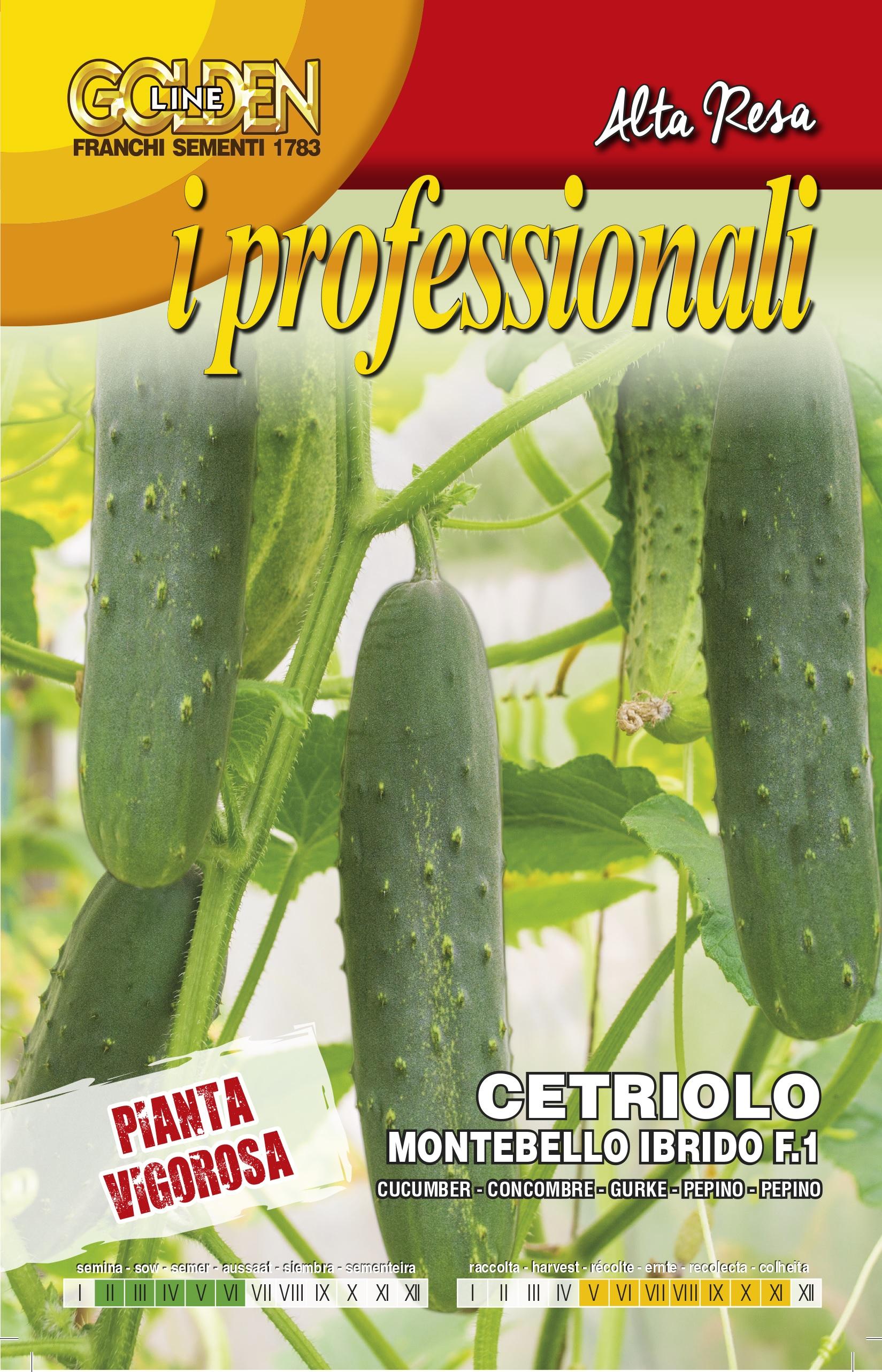 Cucumber Montebello F1 Professional Range