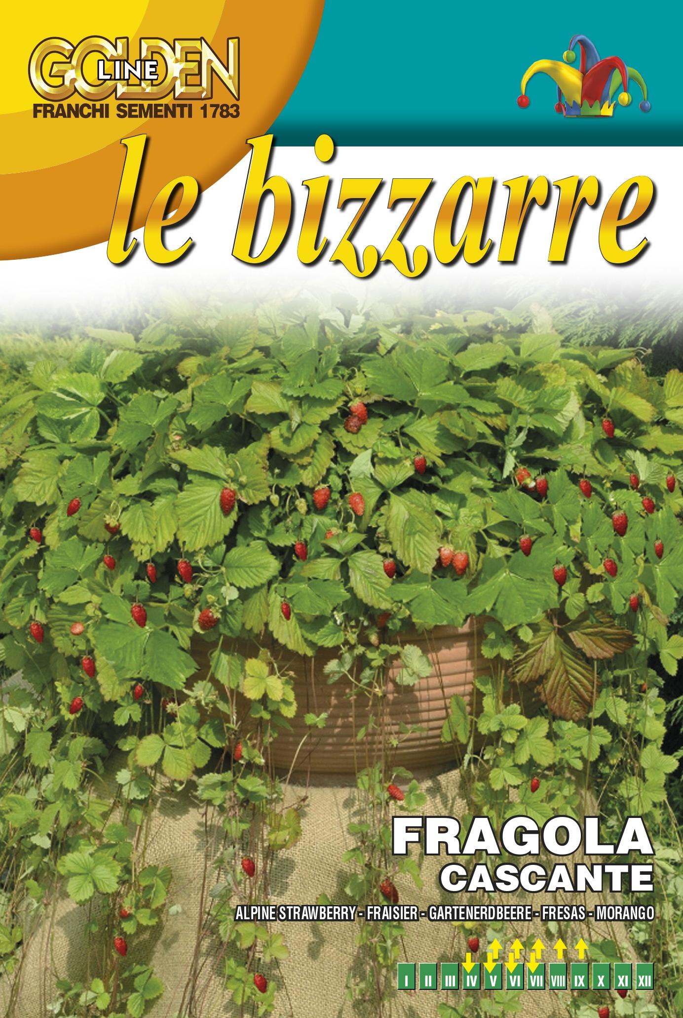 Strawberry Attila