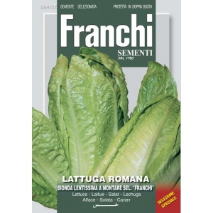 Romaine Lettuce Franchi F1