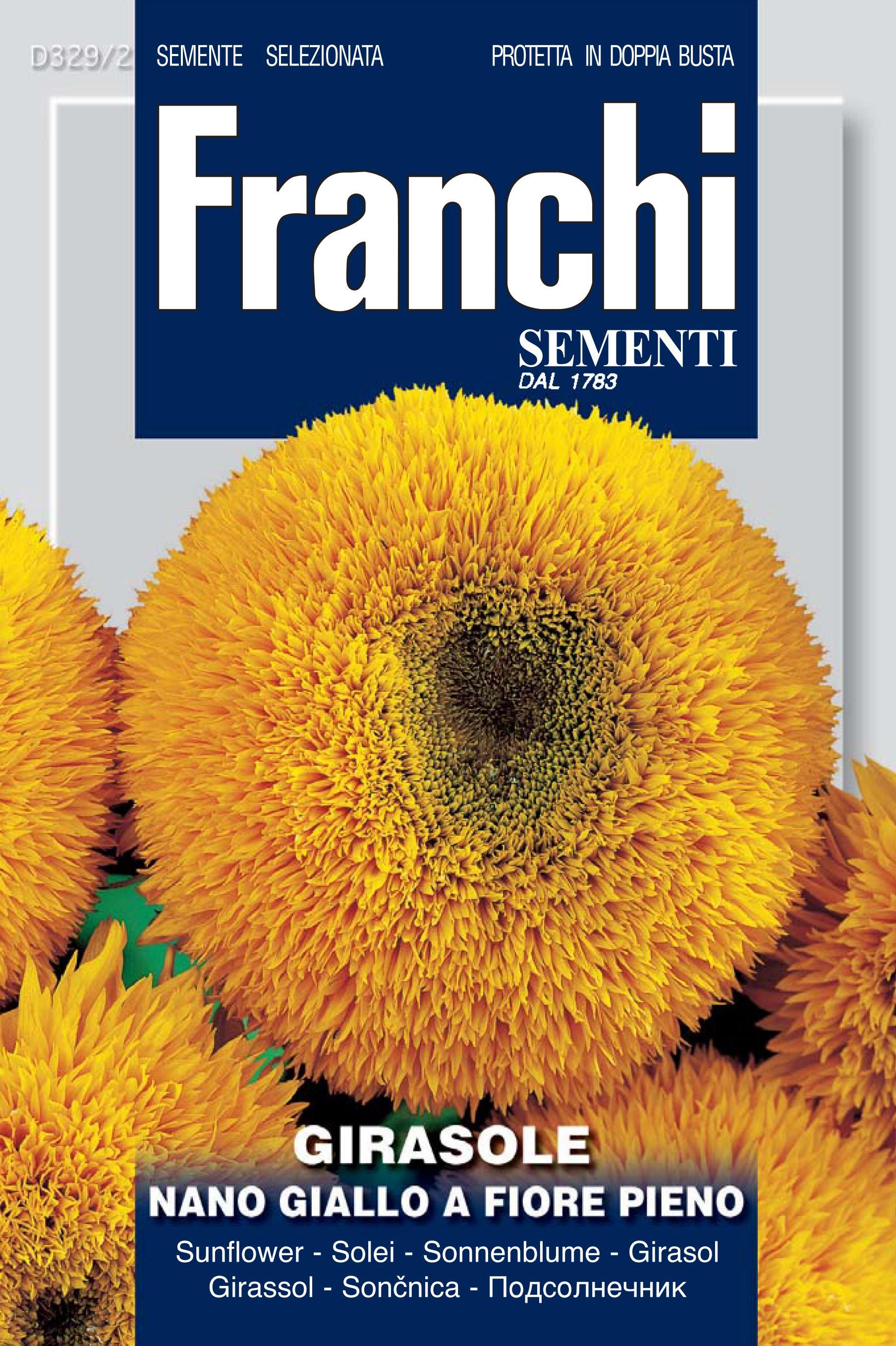 Sunflower Nano Dwarf Giallo Fiore Pieno (A) Helianthus SPP