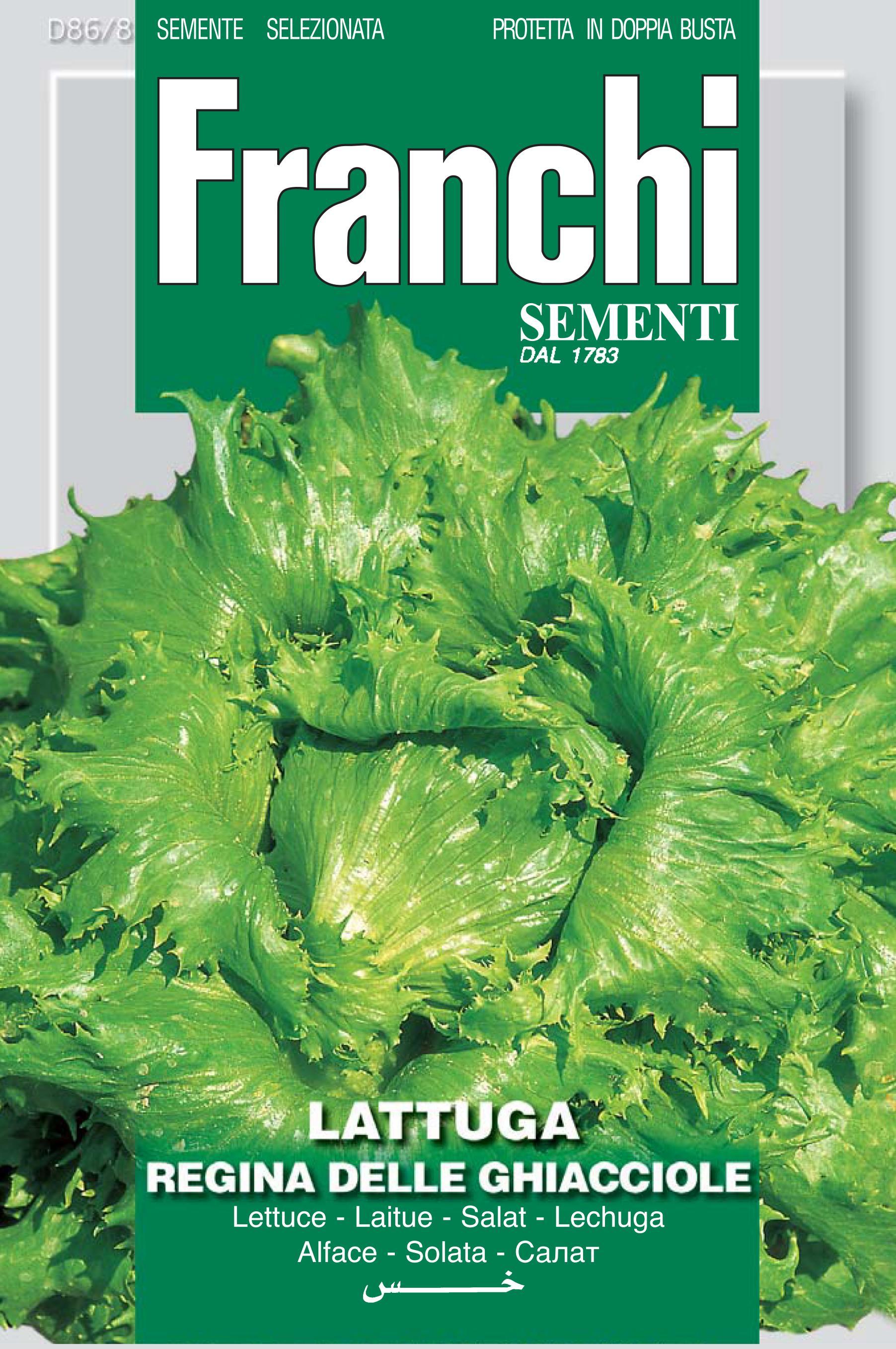 Iceberg Lettuce Regina Ghiacciole/Reine De Glace