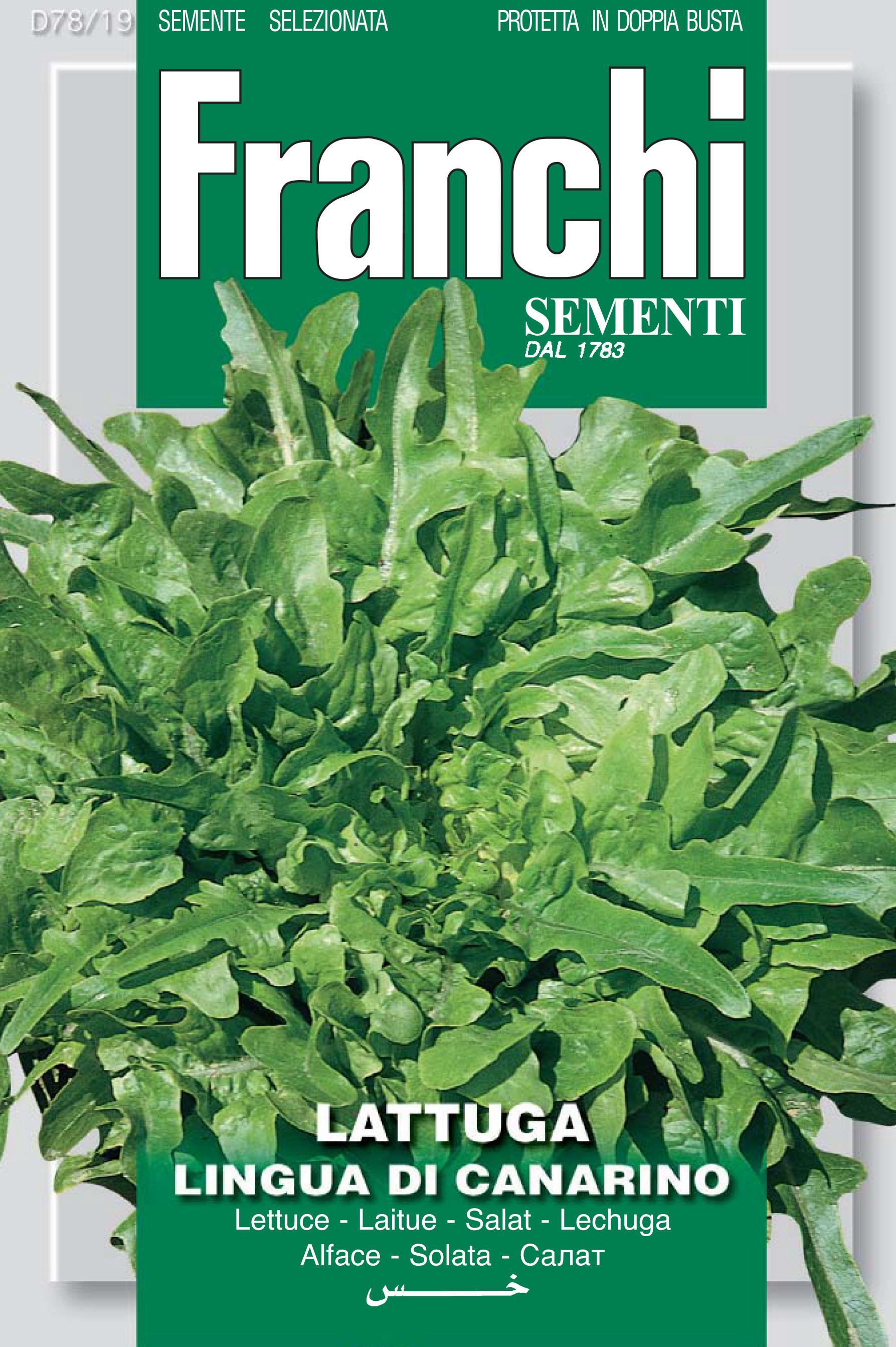 Lettuce Lingua Di Canarino