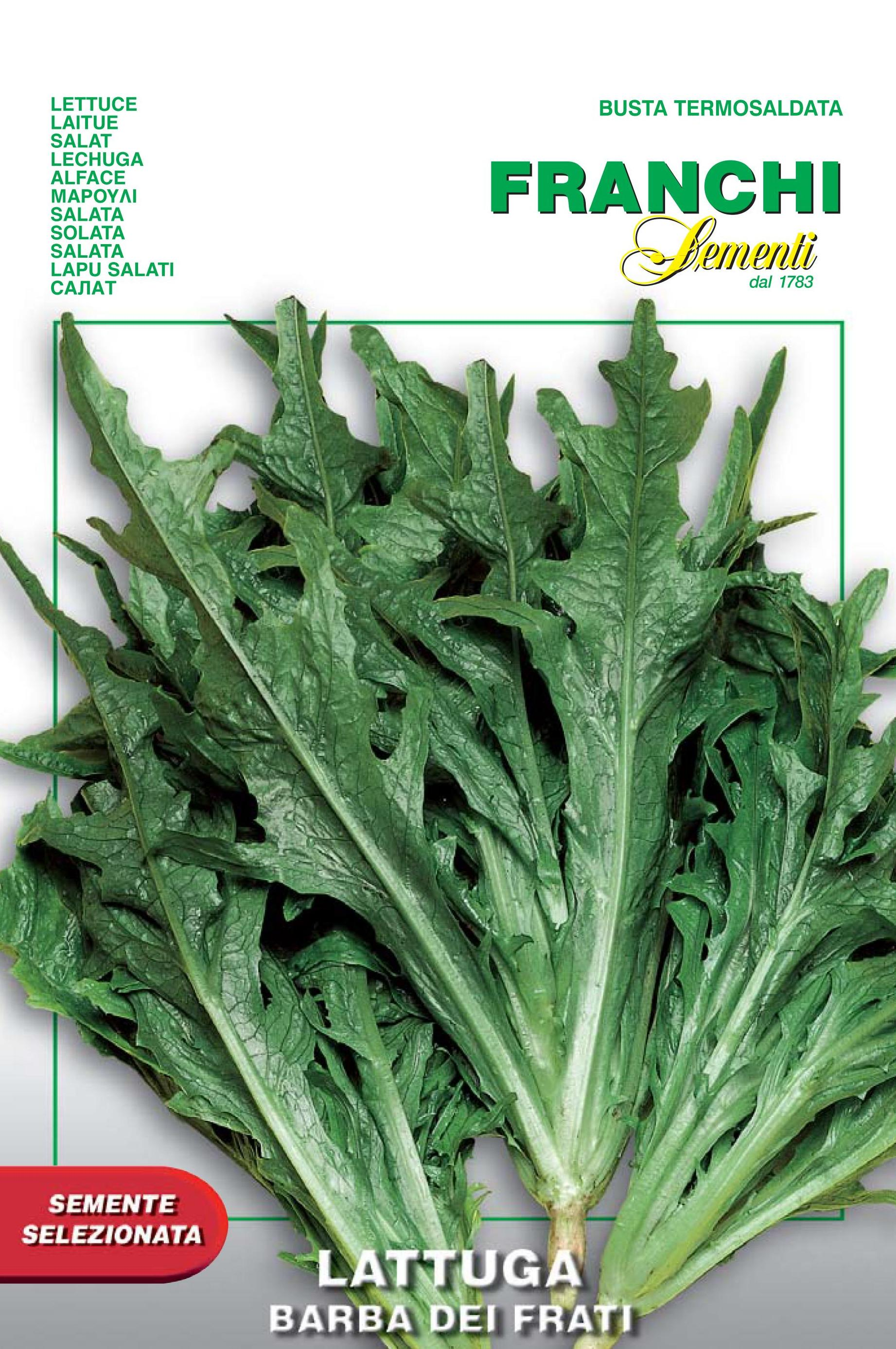 Lettuce Radichetta/Barba Di Frate