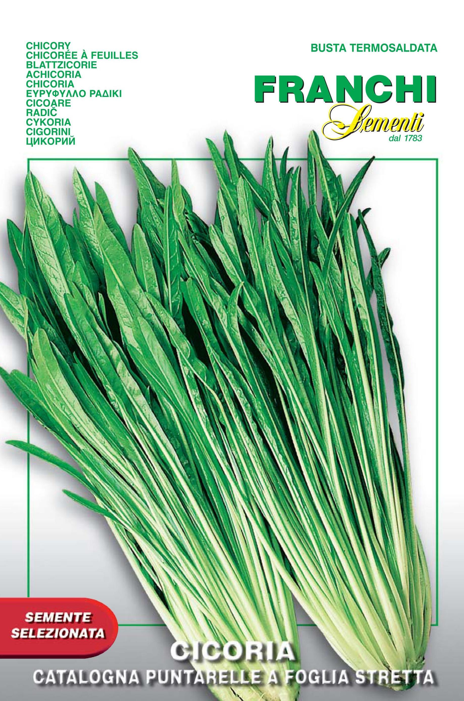 Chicory Catalogna A Foglia Stretta del Veneto