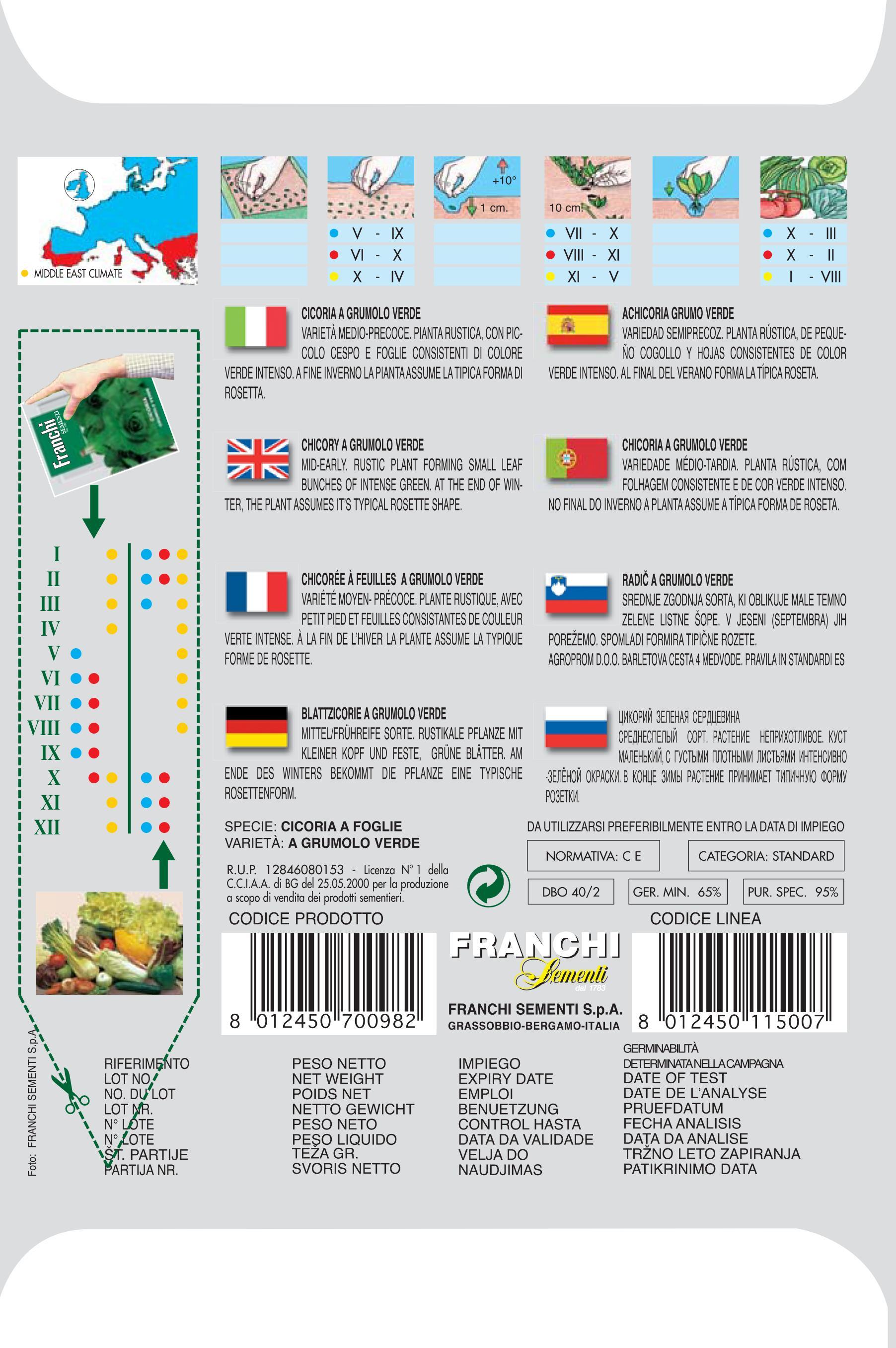 Chicory Grumolo Verde