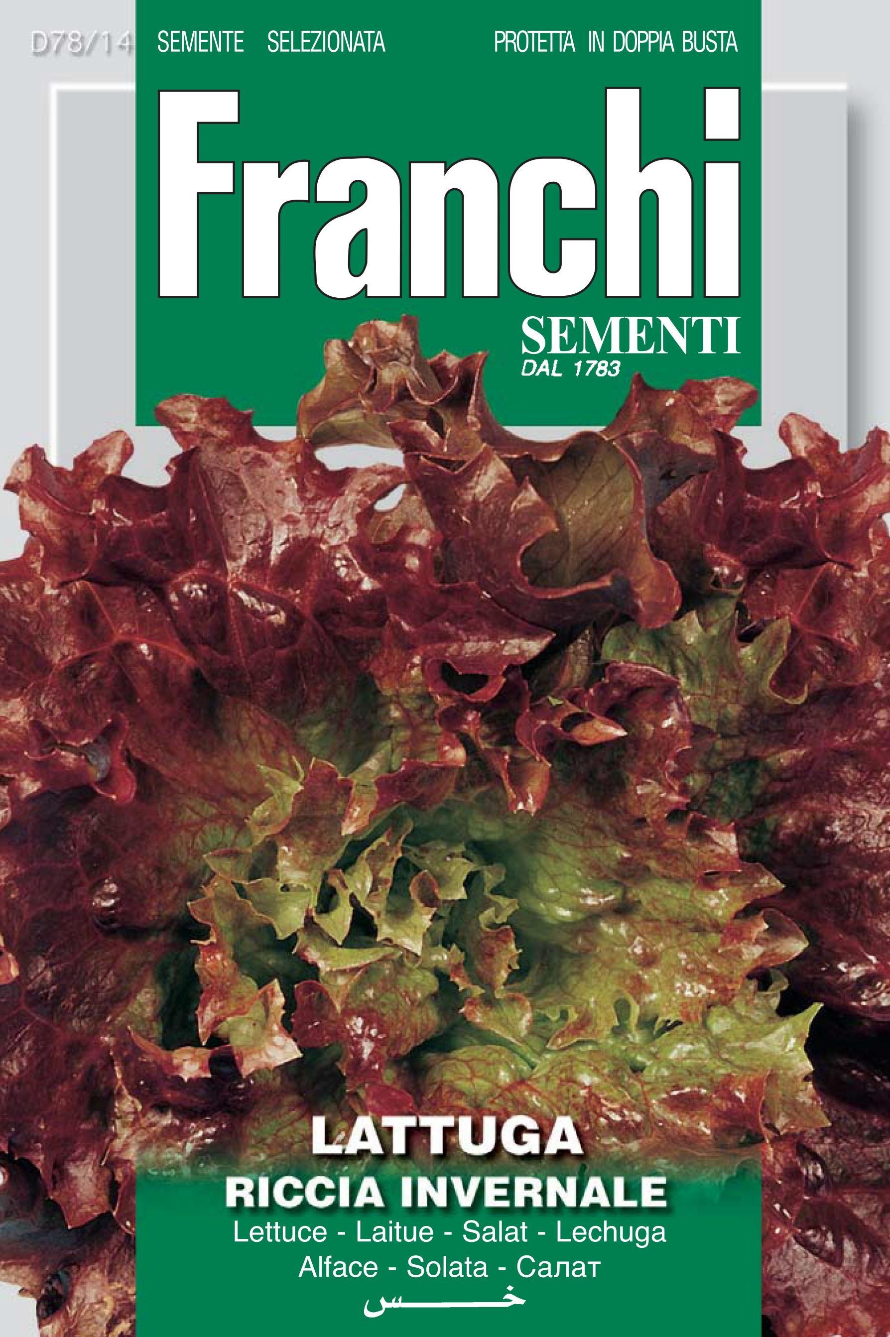 Lettuce Americana Bruna Riccia Invernale d'Hiver
