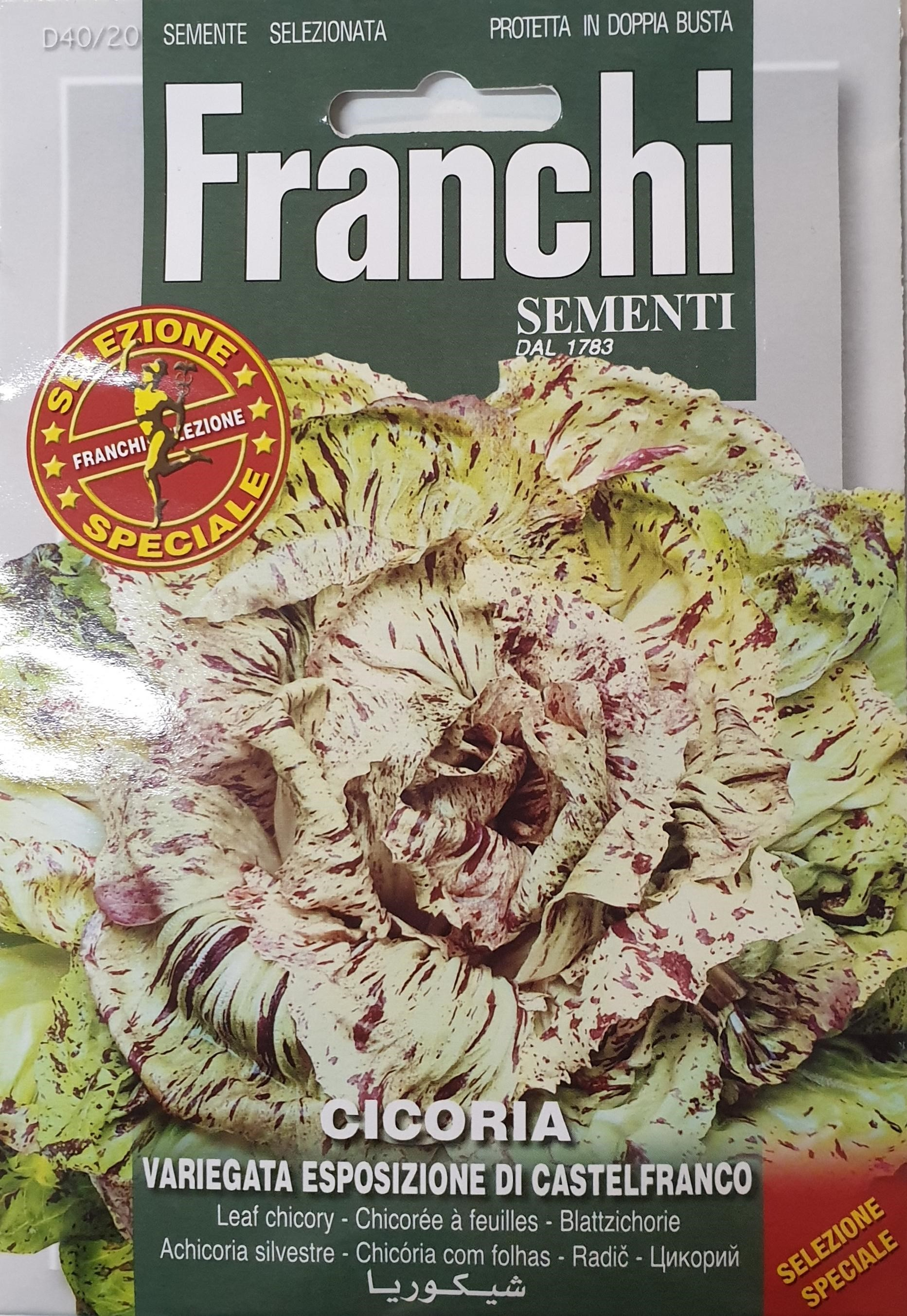Exhibition quality Chicory Castelfranco