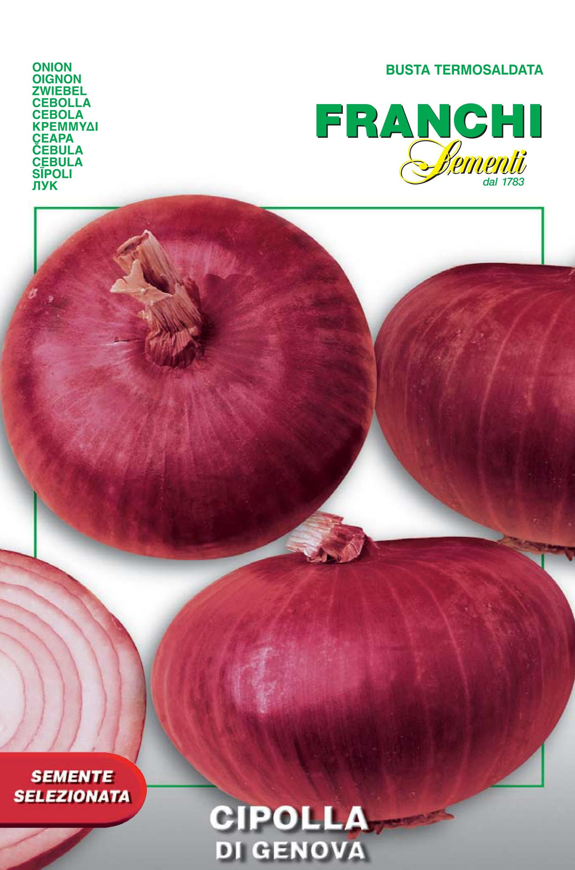 Red Onion Of Genova - Endangered variety* (A) Allium cepa L.