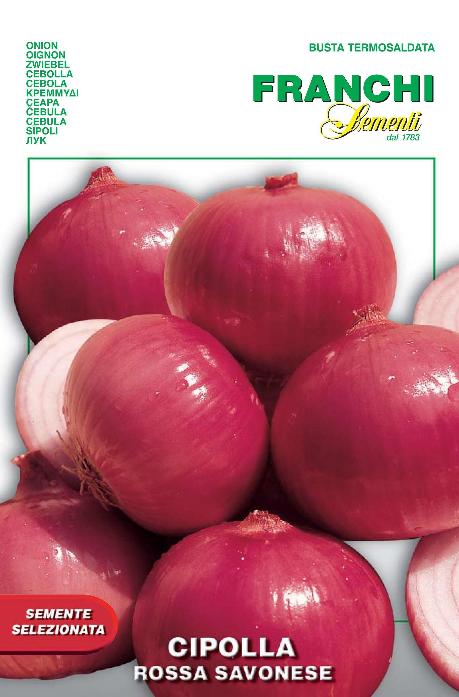 Red Onion Of Savona  (A) Allium cepa L.