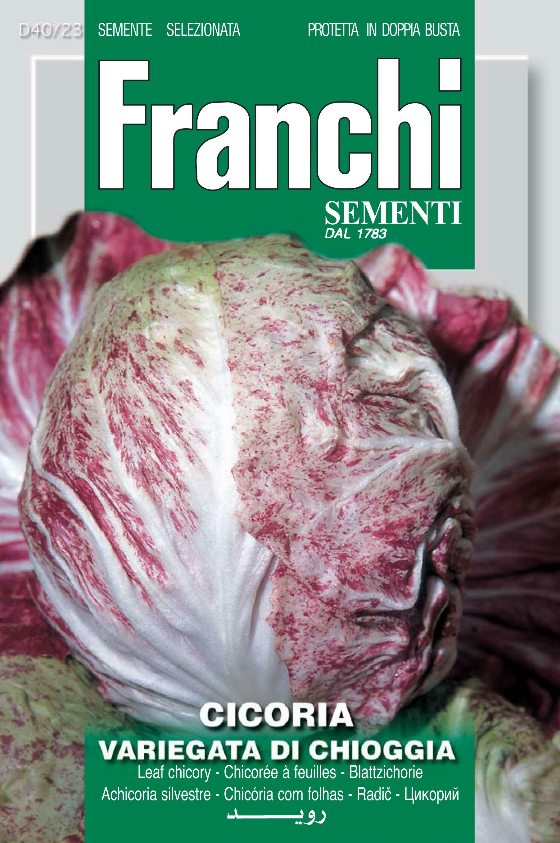 Variegated Chicory Palla Rossa Of Chioggia