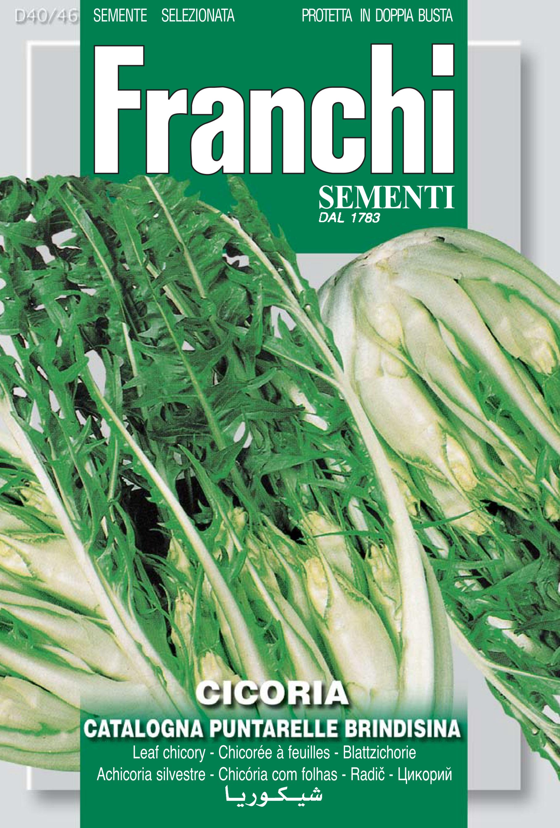 Chicory Puntarelle Of Brindisi