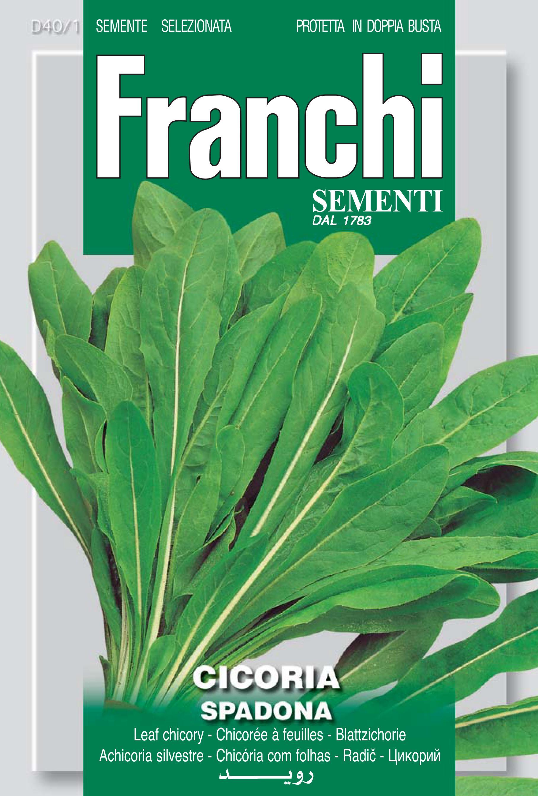 Chicory Spadona