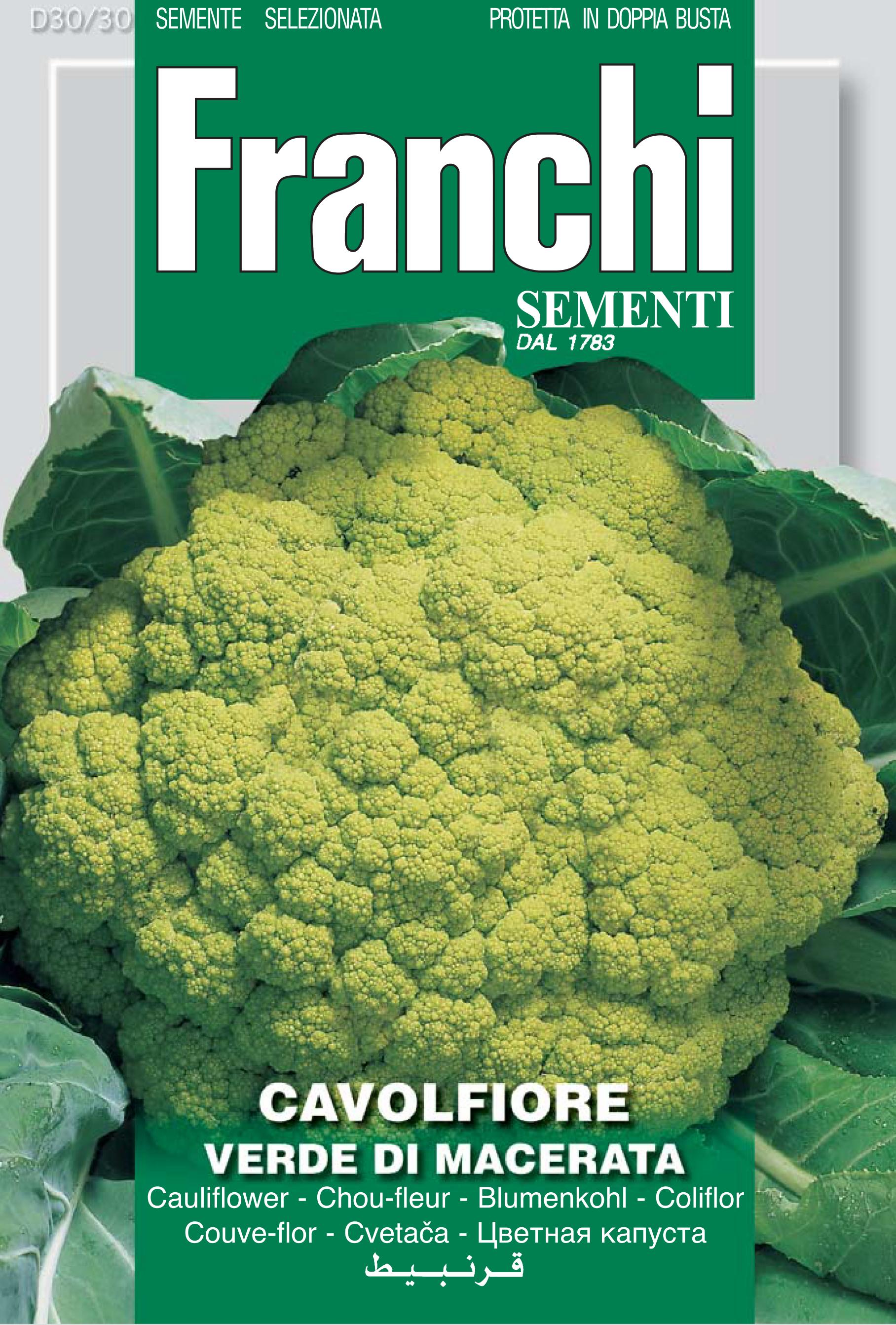 Cauliflower of Macerata AKA Cimone