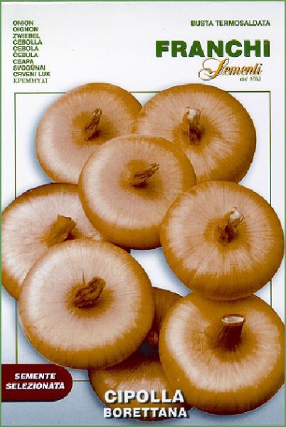 Onion Borettana Of Parma (A) Allium cepa L.