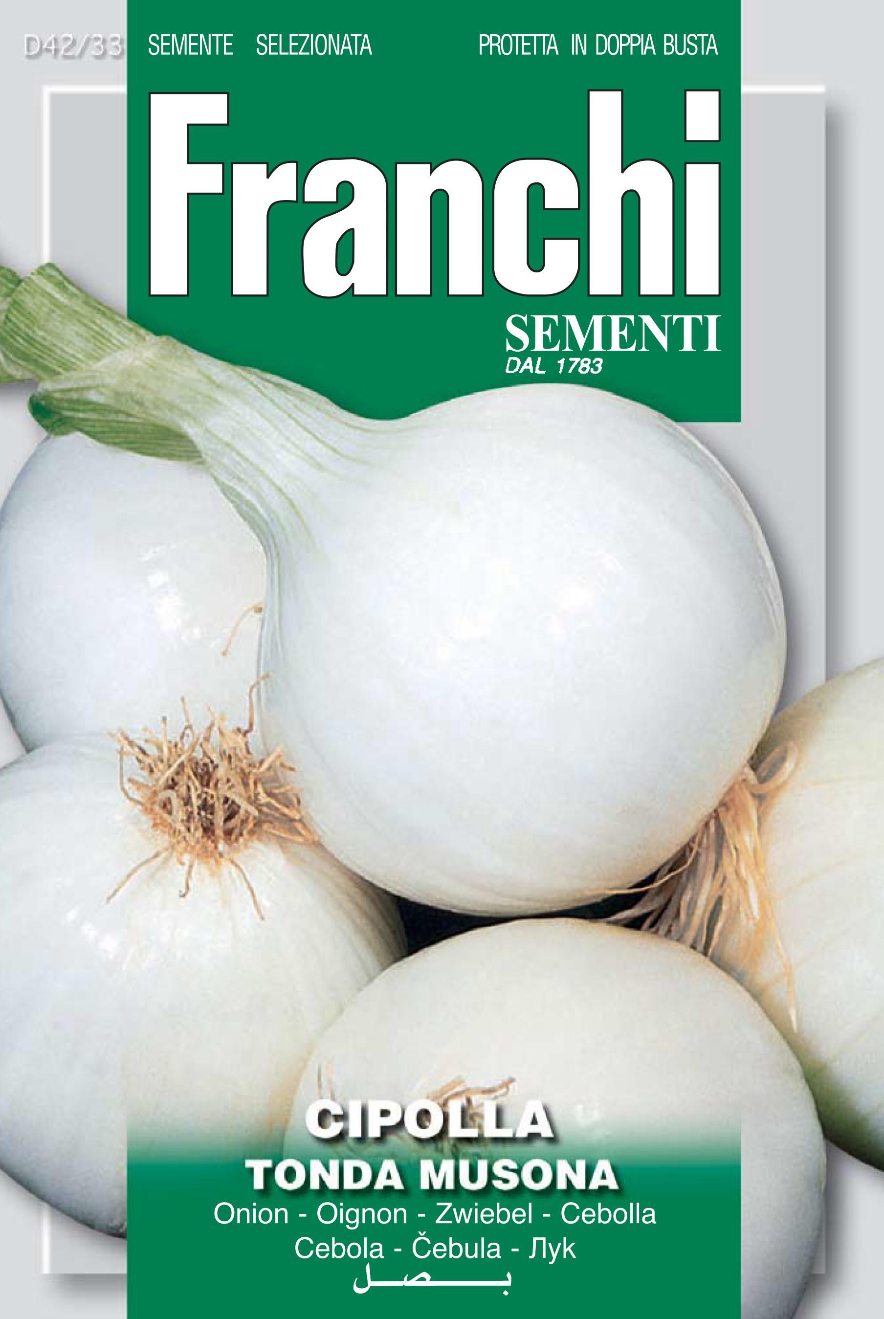 Onion Musona (A) Allium cepa L.