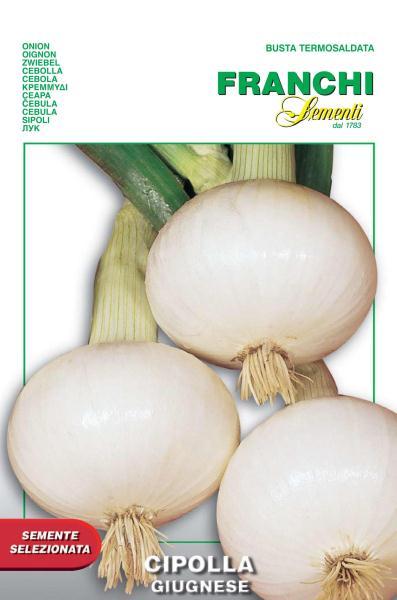 Onion Giugnese (A) Allium cepa L.