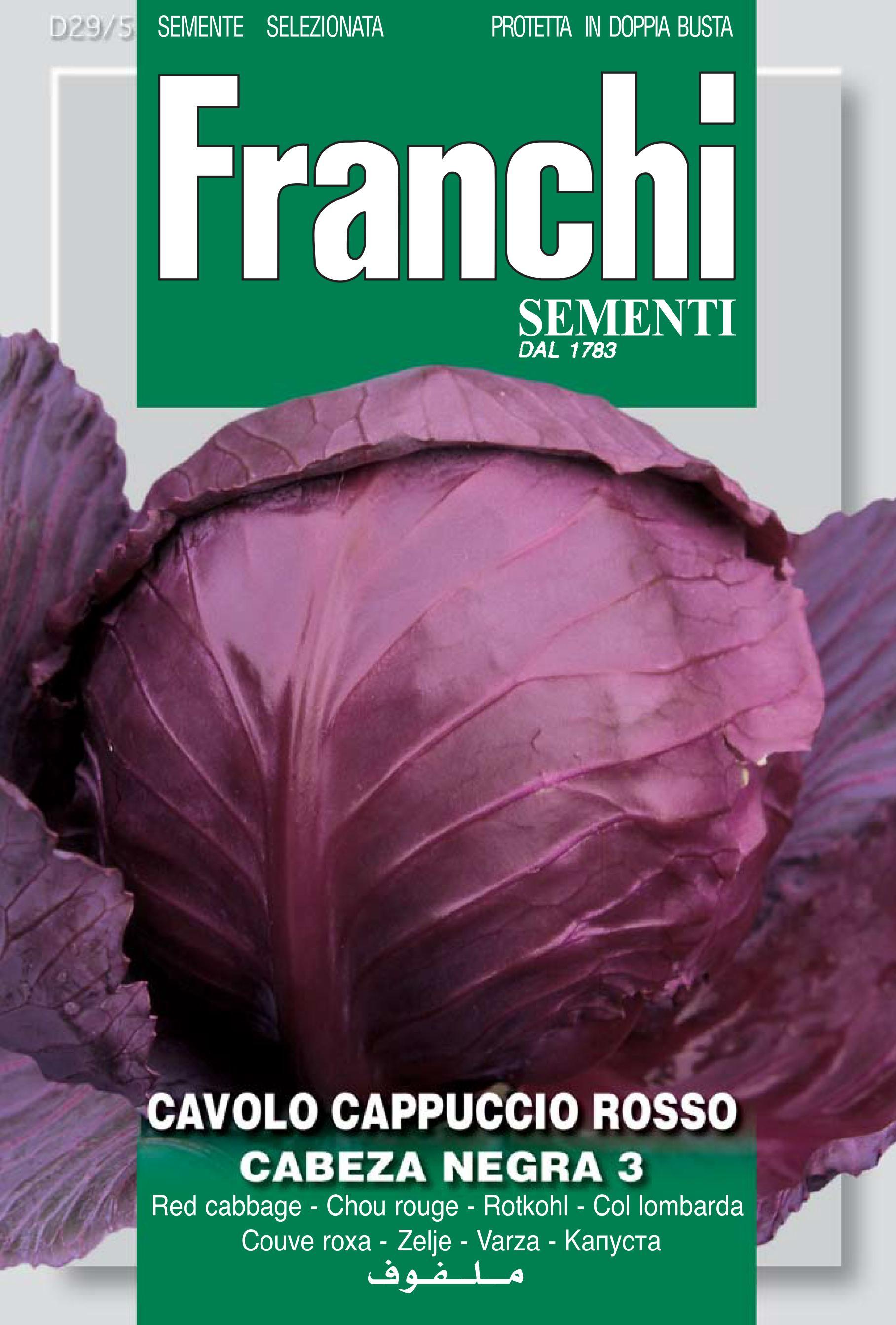 Cabbage Red Testa Nera