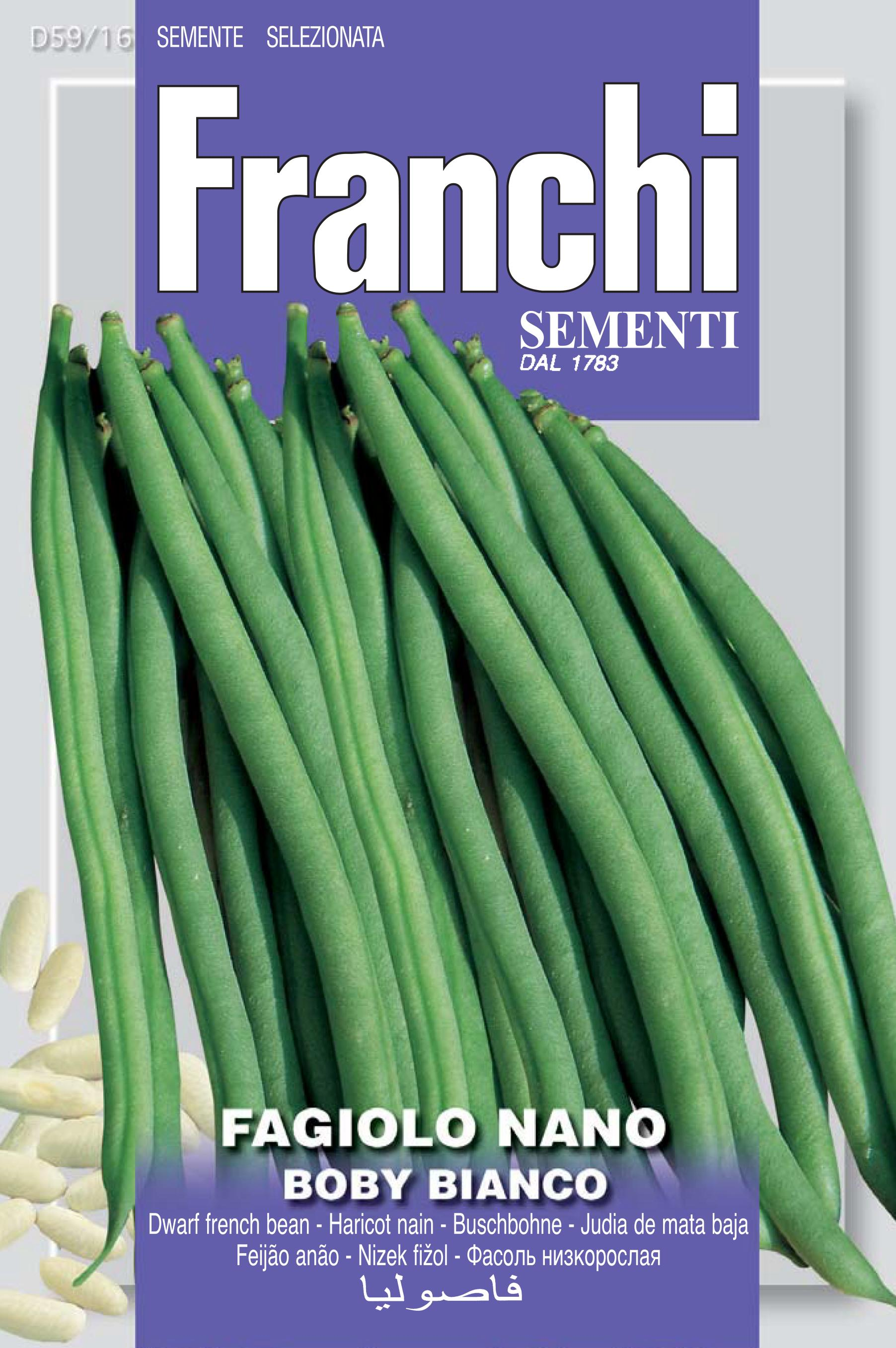 Dwarf French Bean Boby Bianco - Restaurant quality bean. (A) Phaseolus vulgaris L.