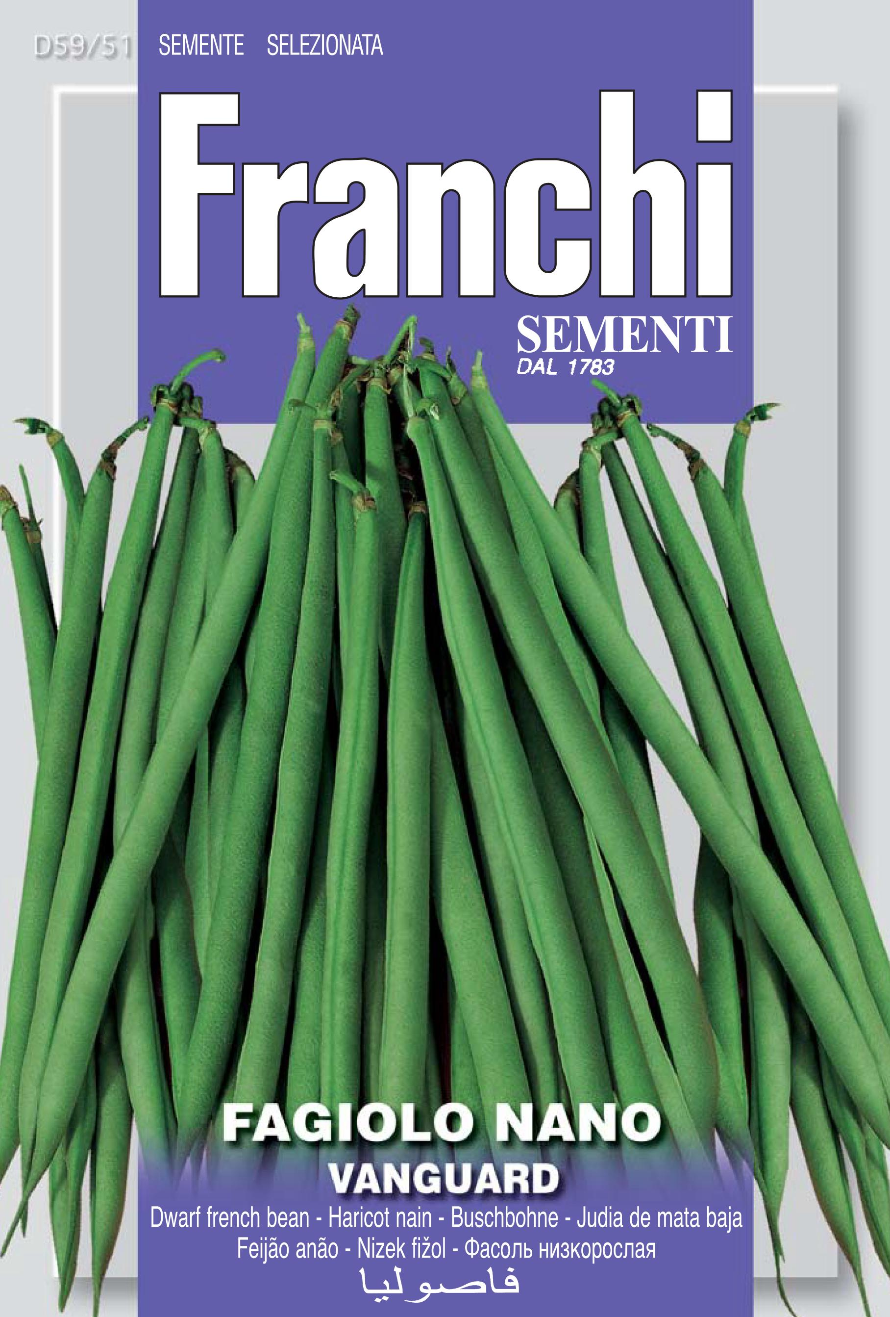 Dwarf French Bean Vanguard save 46p (A) Phaseolus vulgaris L.