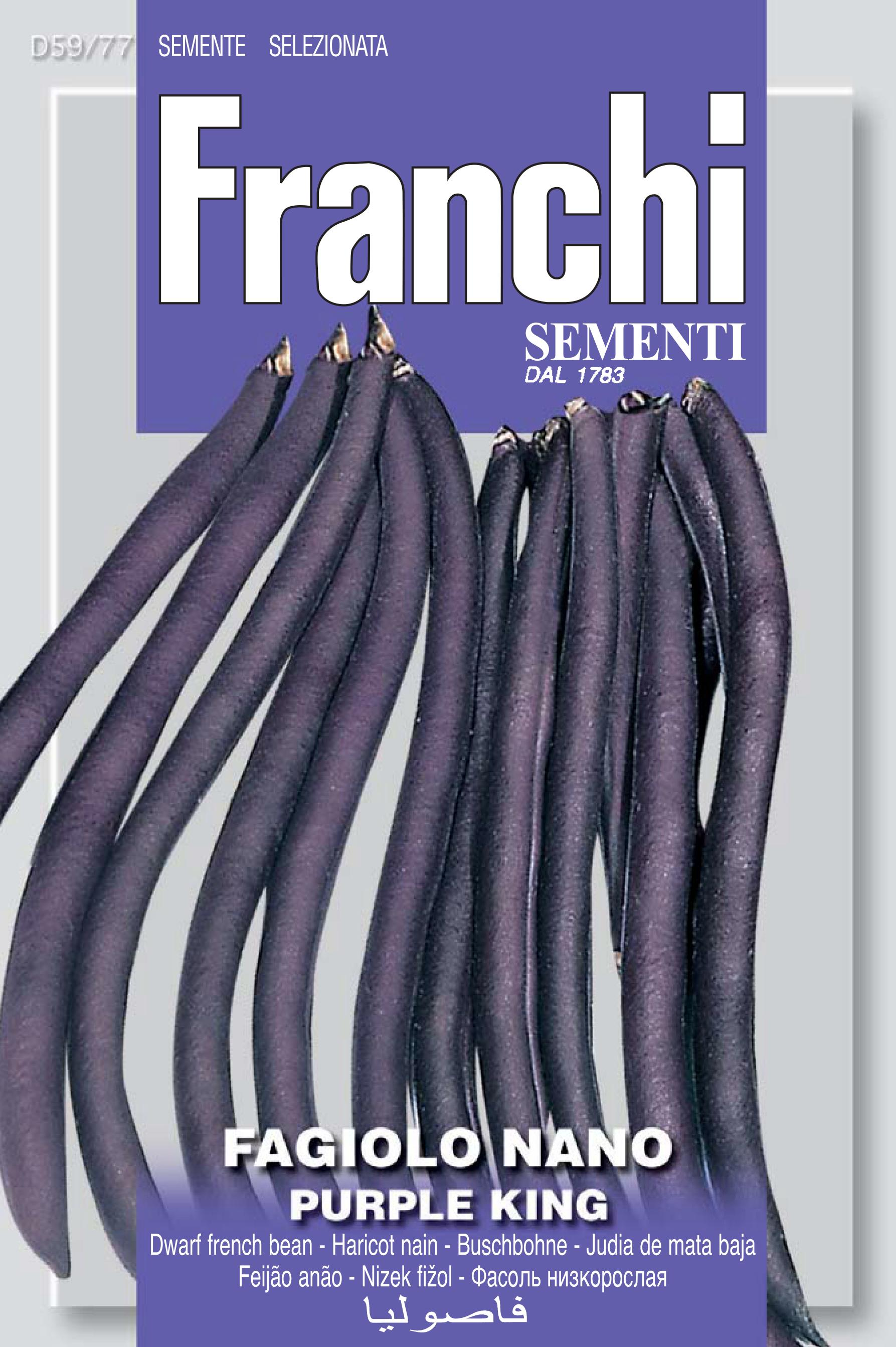 Dwarf French Bean Purple King (A) Phaseolus vulgaris L.