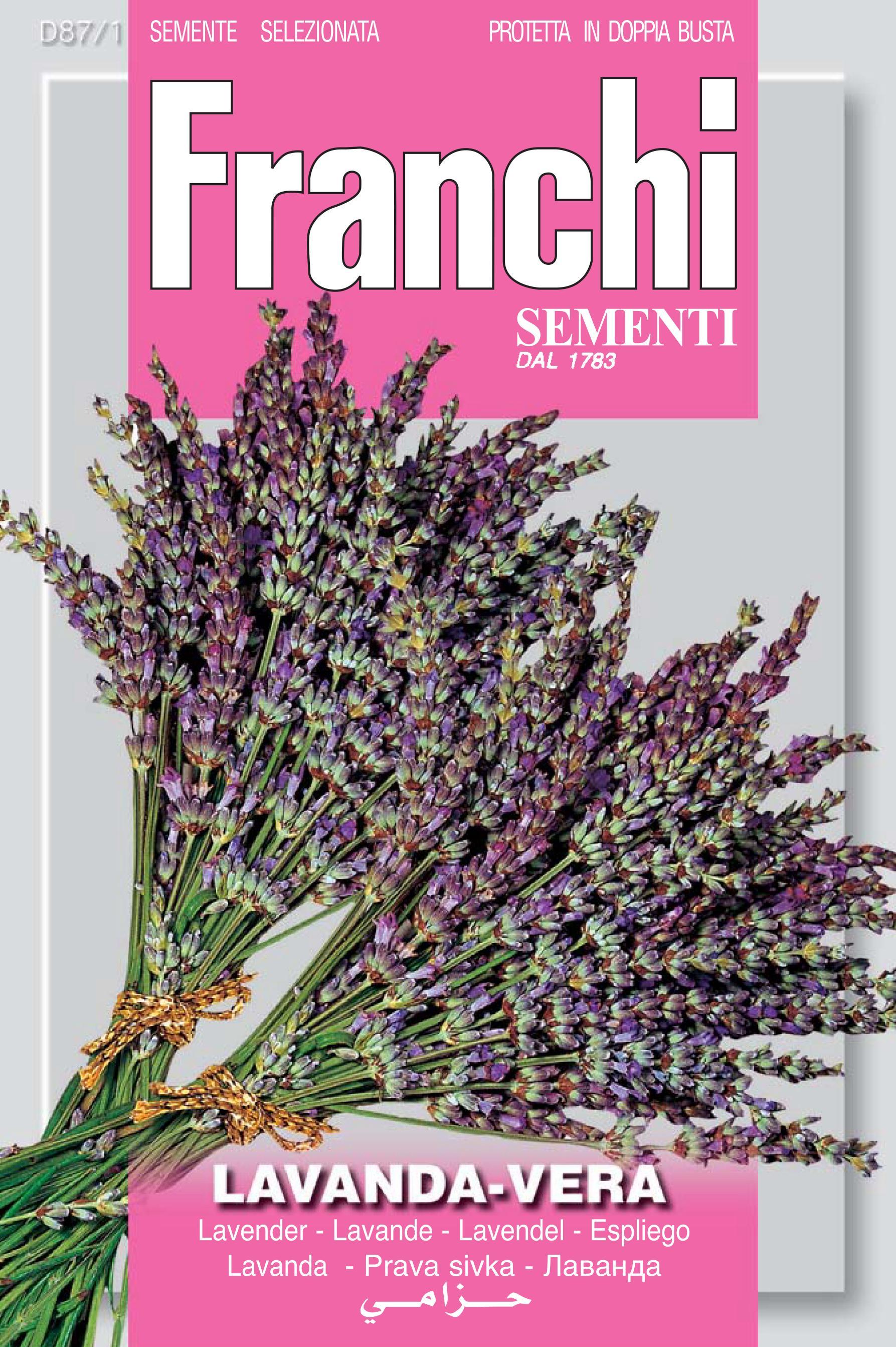 Lavender spiga vera