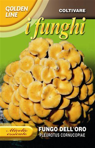 Golden mushroom Ideal for Indoor Gardening