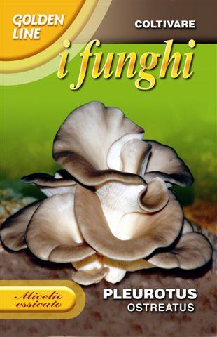 Oyster mushroom Ideal for Indoor Gardening
