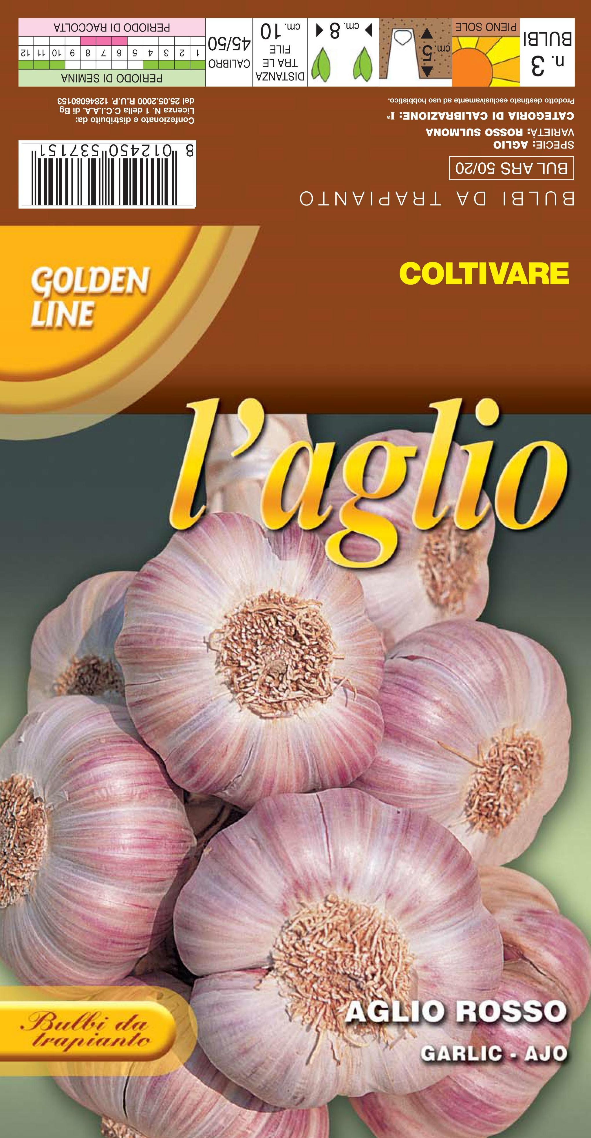 Italian Garlic rossa di Sulmona  (A) Allium Sativum L.