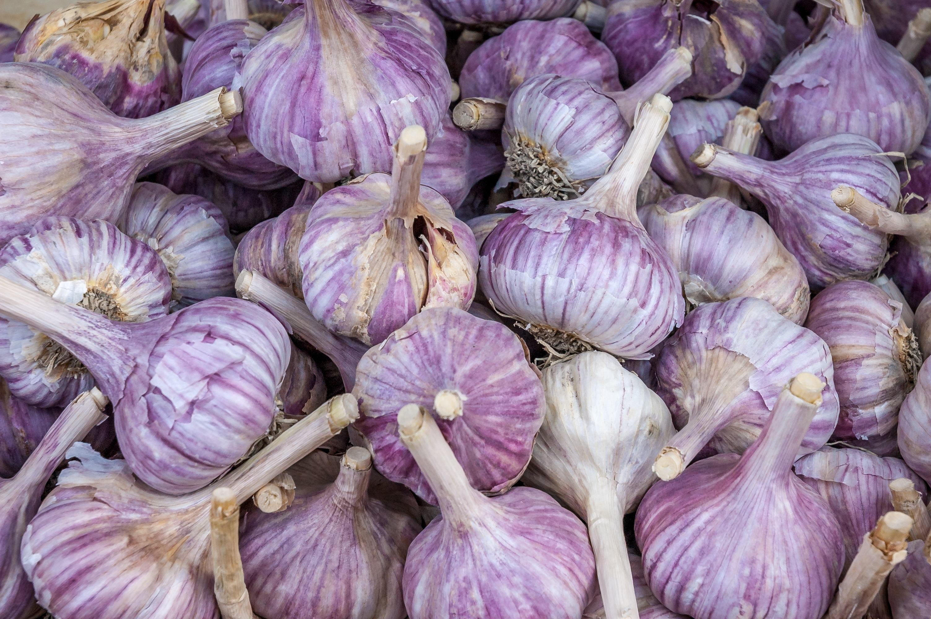 French red garlic  PRE-ORDER for 1st Nov 2020