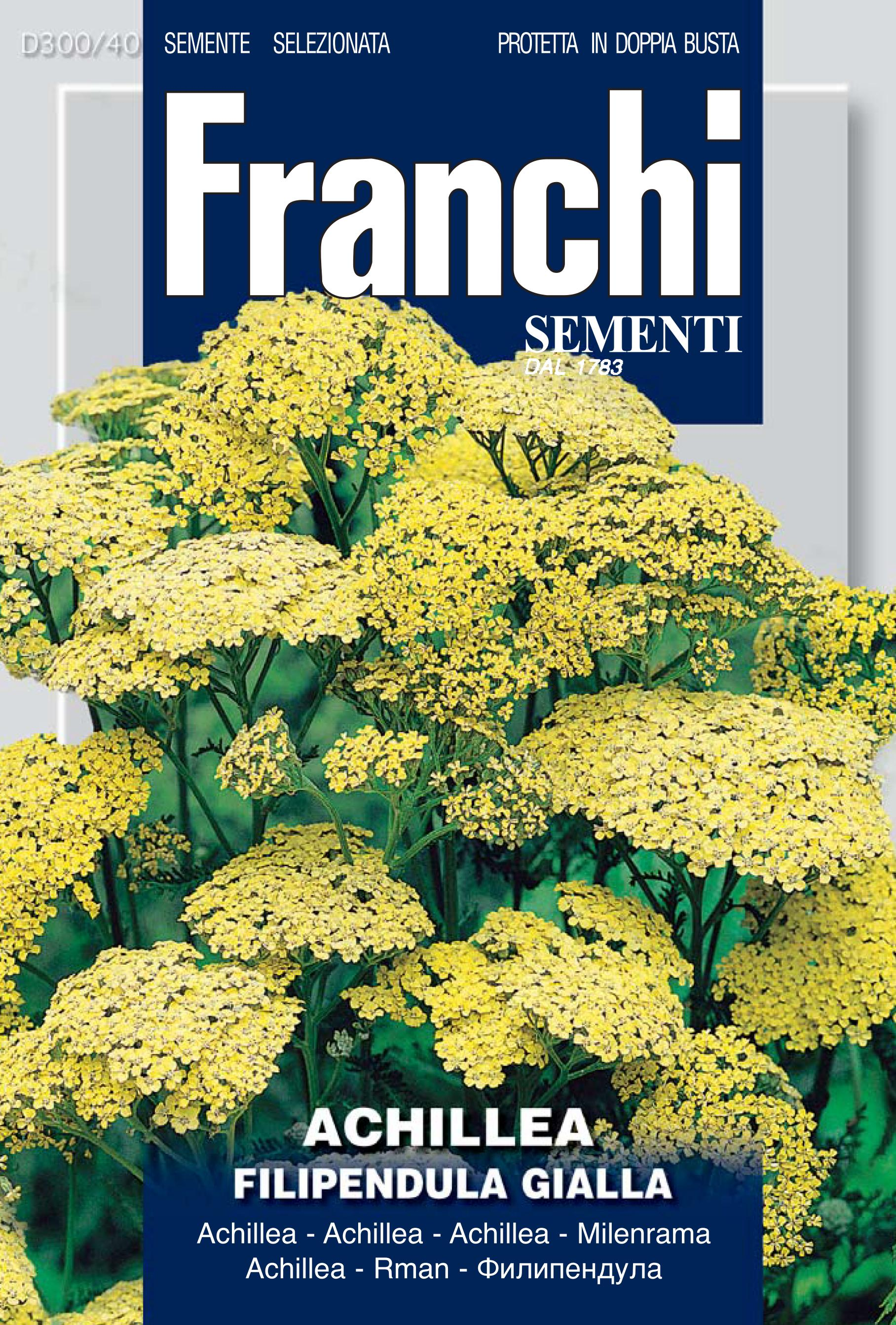 Achillea Filipendula Yellow