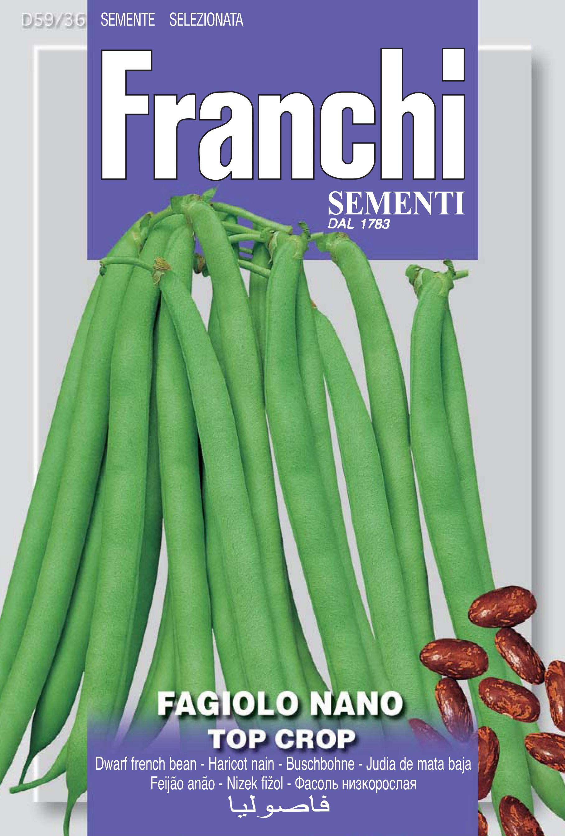Dwarf French Bean Top Crop (A) Phaseolus vulgaris L.