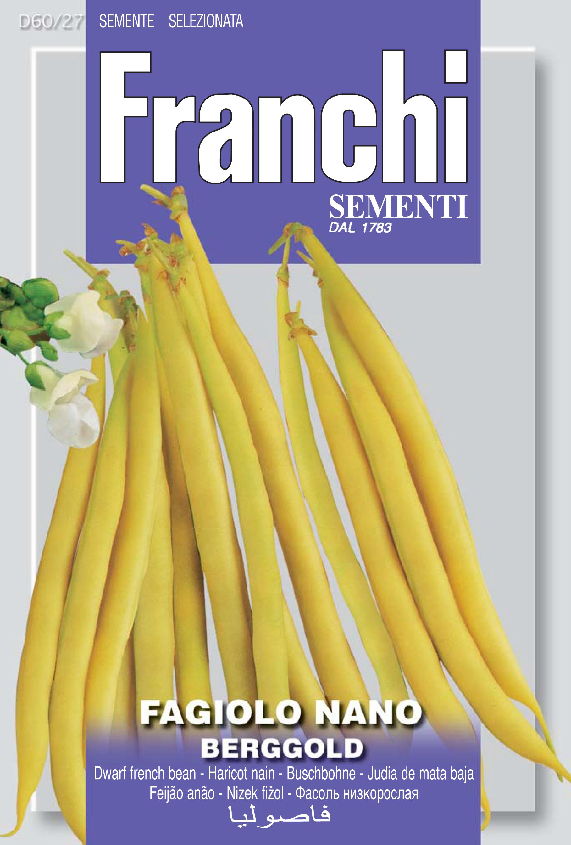 Dwarf Yellow French Bean Berggold (A) Phaseolus vulgaris L.