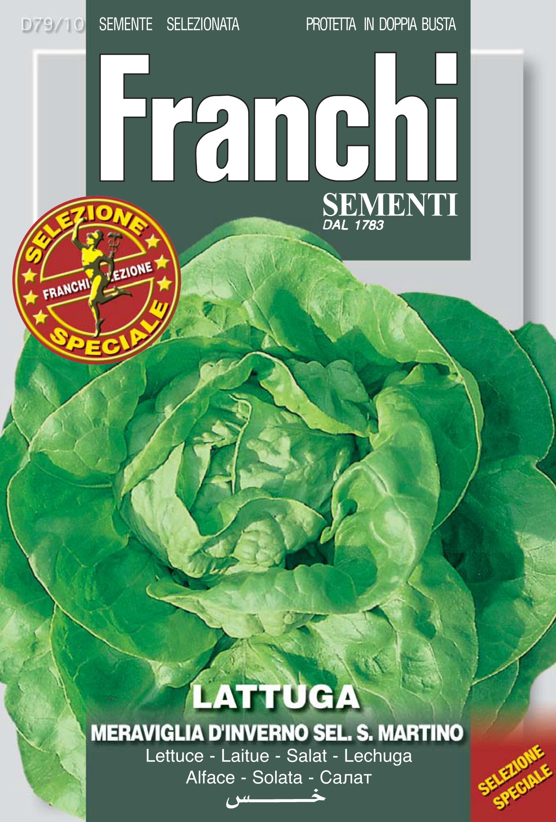 Lettuce Meraviglia D'Inverno S.Martino