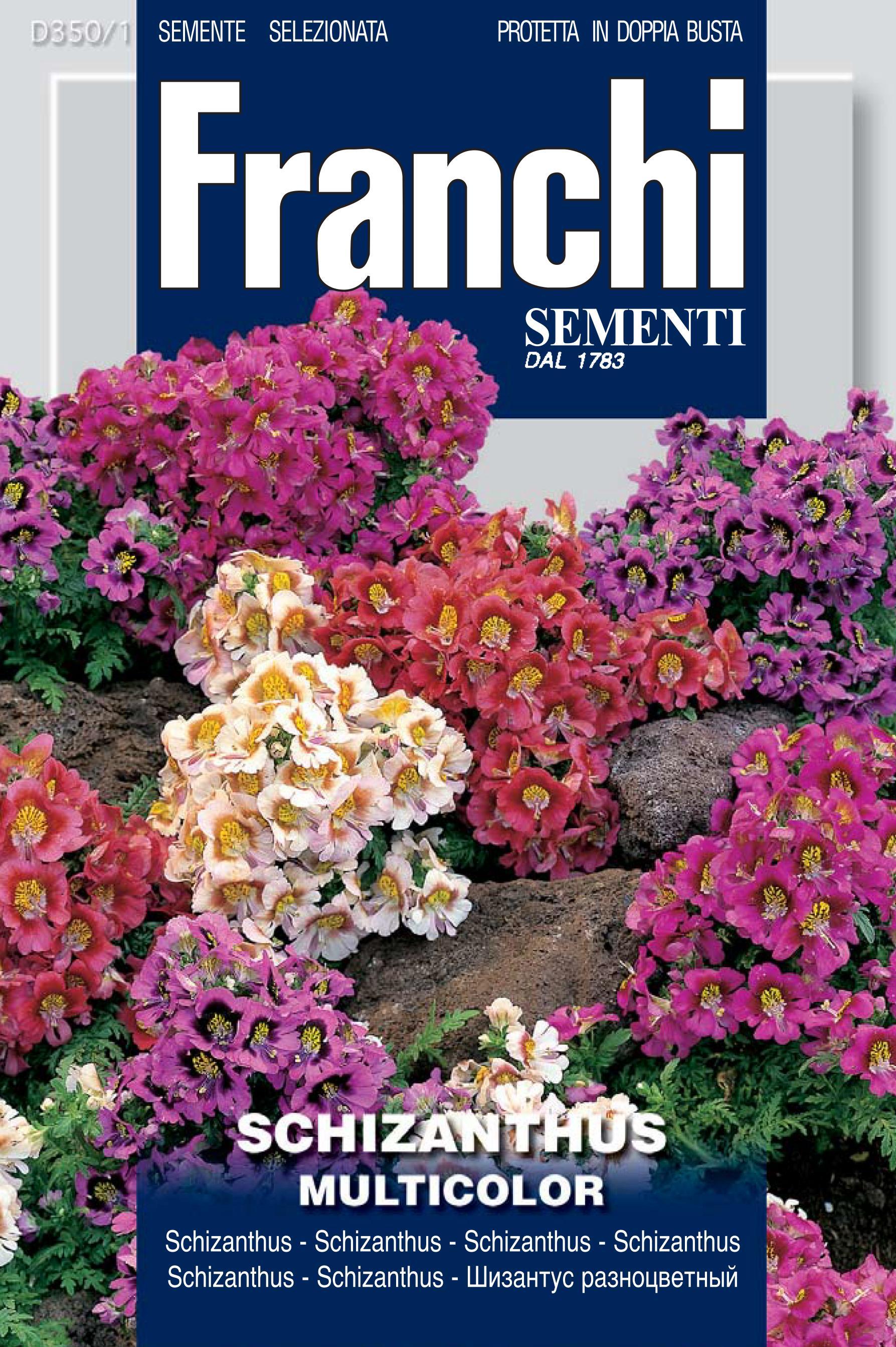 Schizanthus multicolor