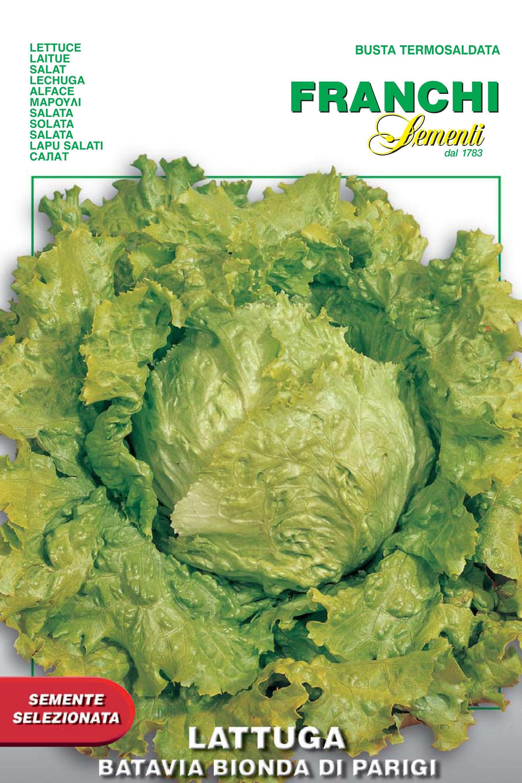 Lettuce Batavia Of Paris
