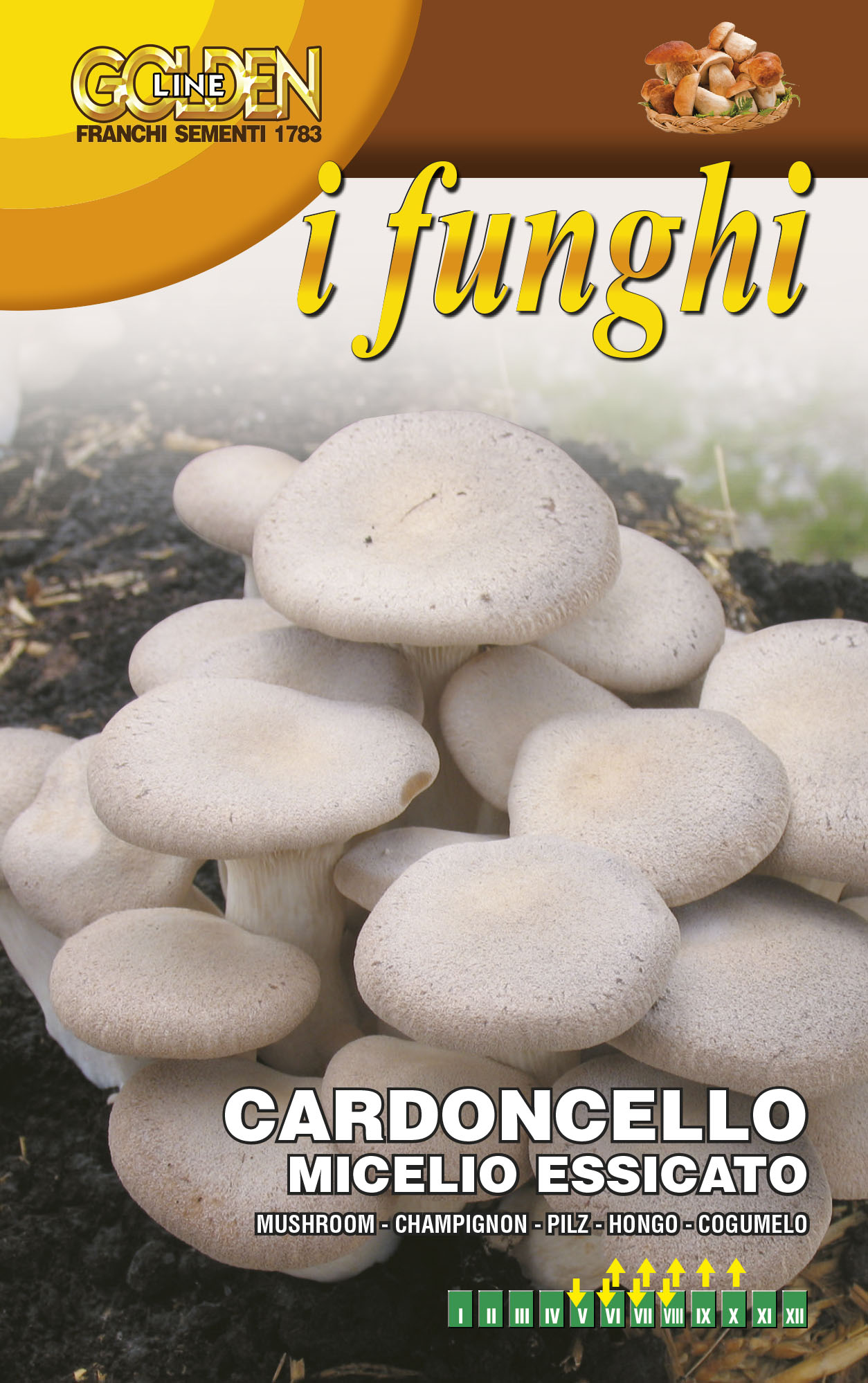 Cardoncello mushroom Ideal for Indoor Gardening *UK Only