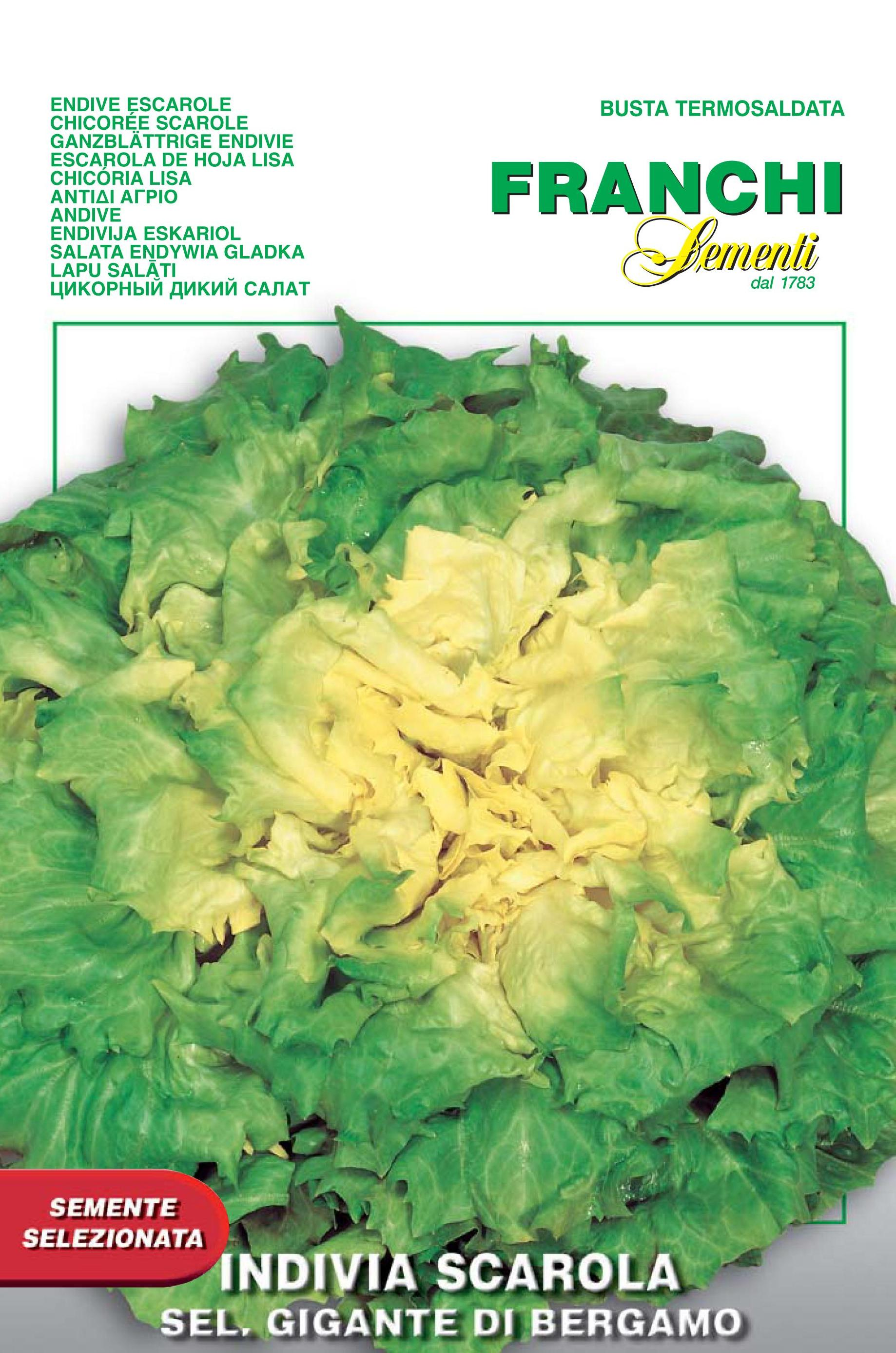 Endive Scarola Gigante Di Bergamo - Endangered variety*