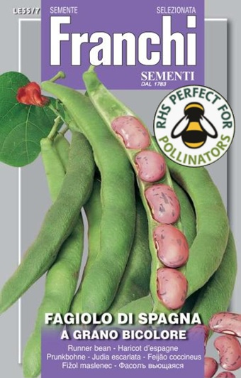 Runner Bean Di Spagna Bicolore UK only (A) Phaseolus coccineus L.