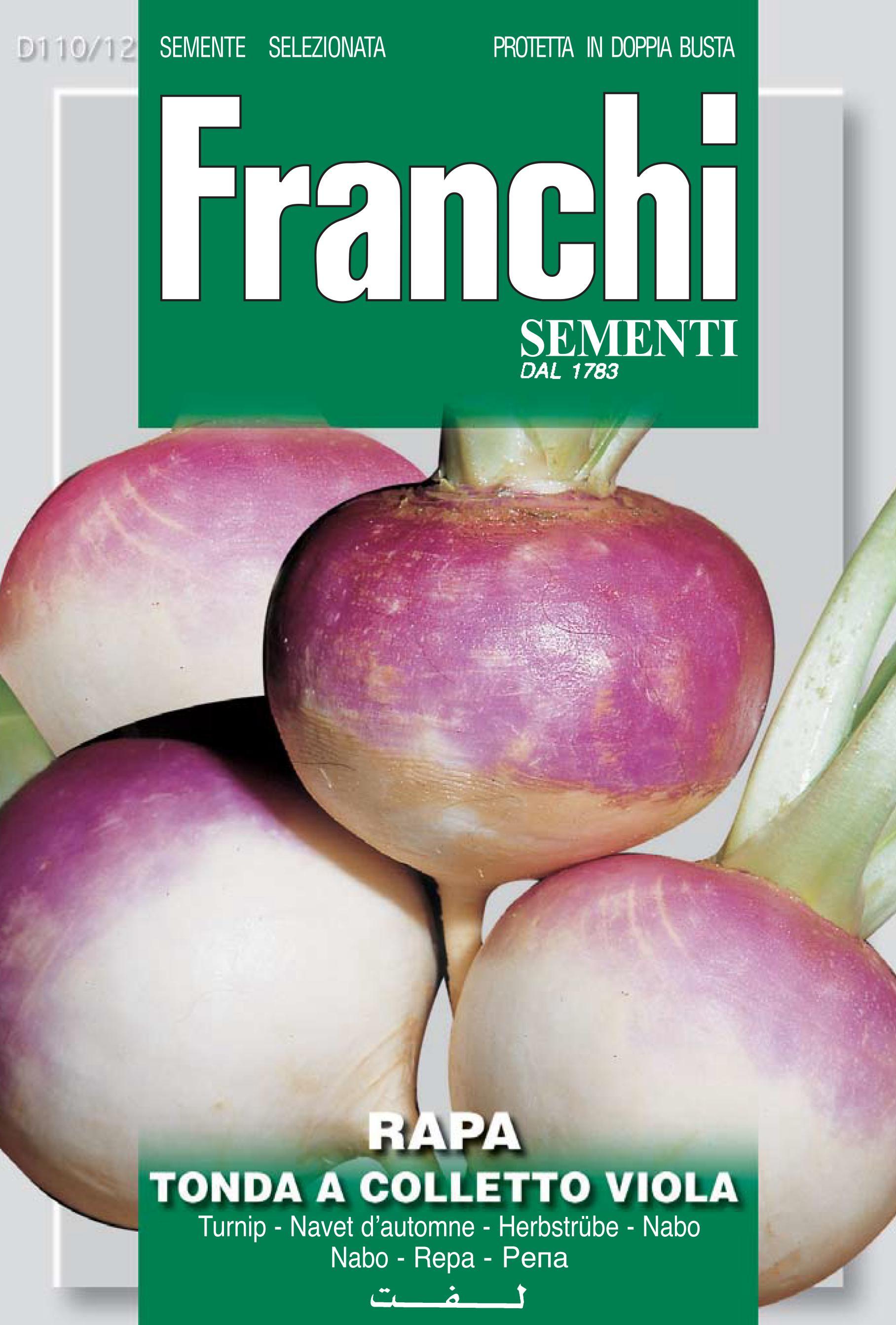 Turnip Tondo a Colletto Viola (A) Brassica rapa L.