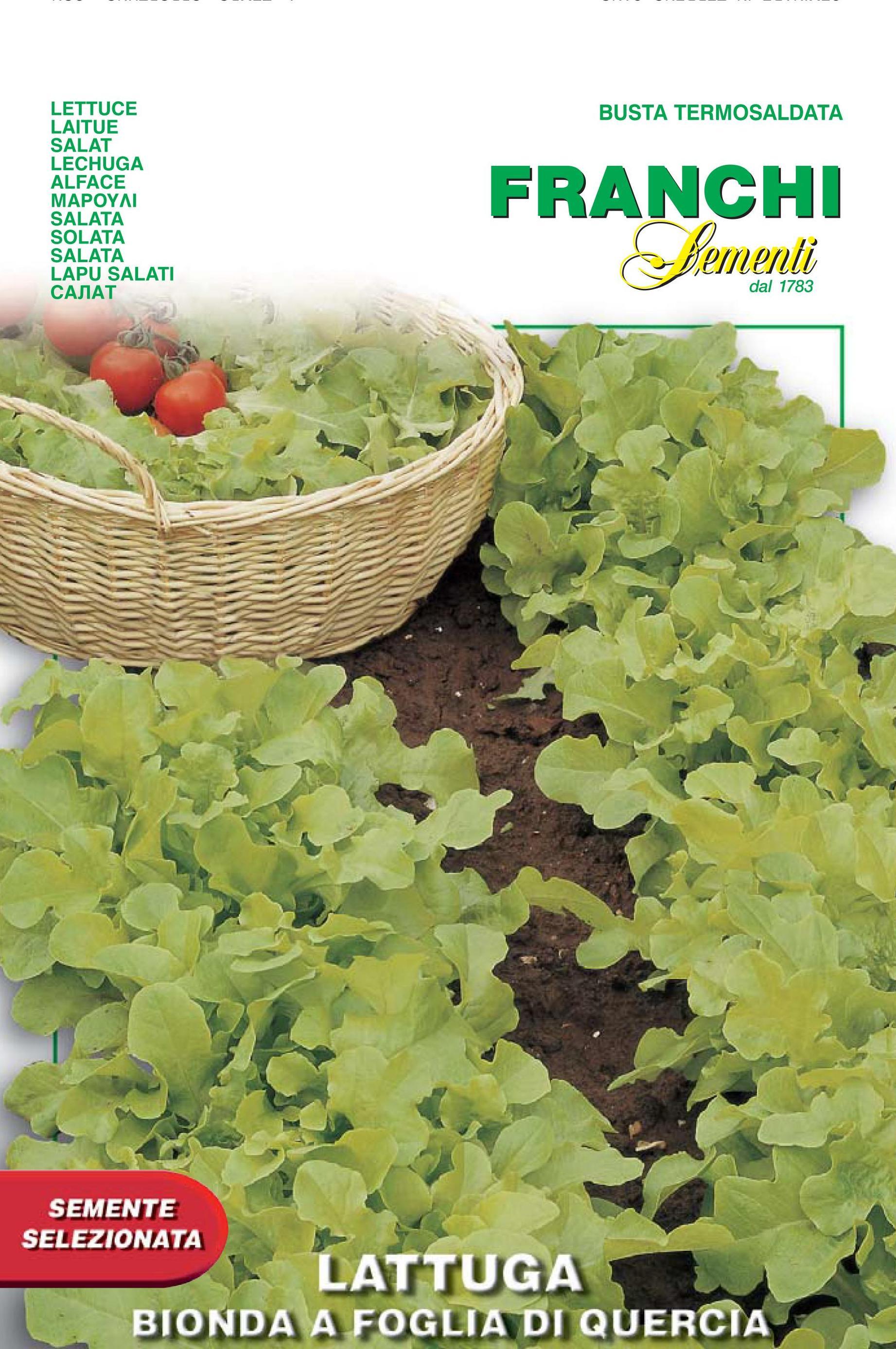 Lettuce Oak Leaf Foglia Di Quercia