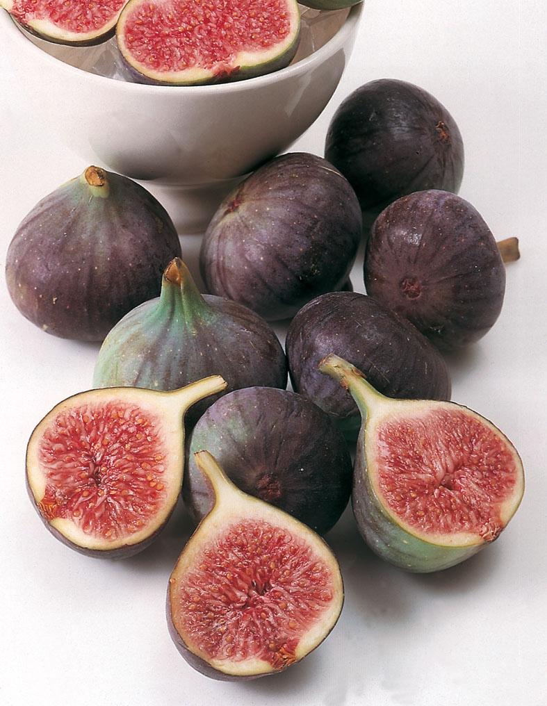 Black Fig Brogiotto