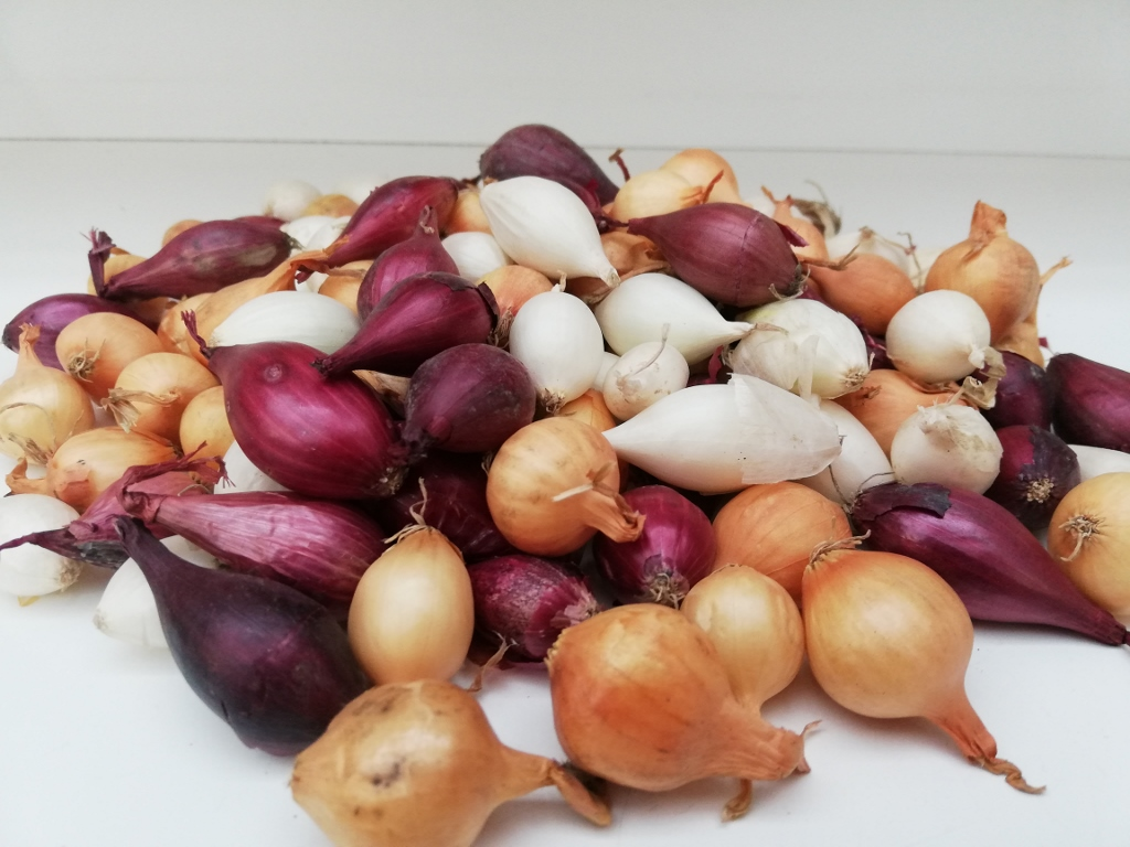 Tris of Onions - Red, Gold & White 500g preorder for Autumn