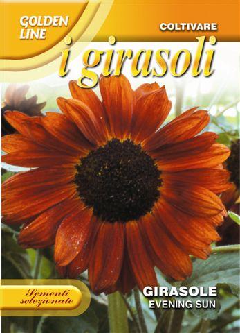 Sunflower Evening Sun (A)Helianthus SPP