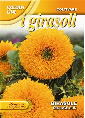 Sunflower Orange sun (A)Helianthus SPP