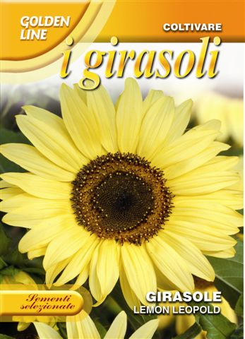 Sunflower Lemon Leopold (A)Helianthus SPP